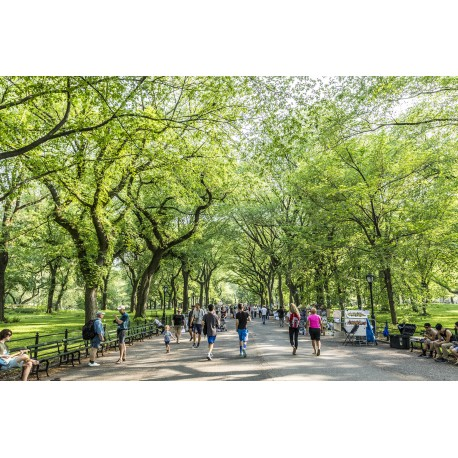 Central Park - New York/EUA